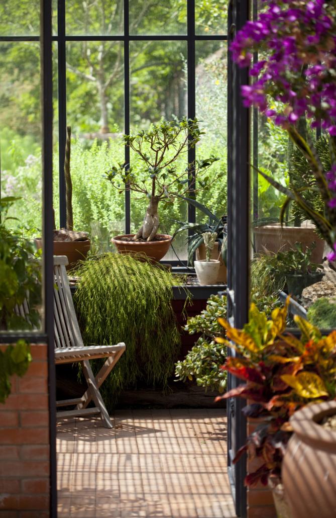 Quelles plantes pour mon jardin d'hiver ou ma véranda ...